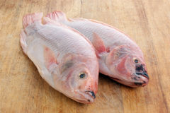 Two fresh african tilapia Royalty Free Stock Photography