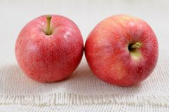 Two fresh apples Royalty Free Stock Image