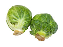 Two fresh Brussel sprouts Stock Photography