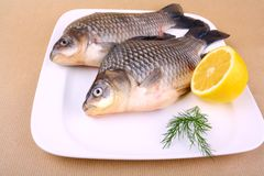Two fresh carp on white plate with lemon Stock Photography