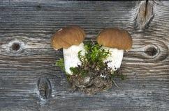 Two fresh cep boletus mushroom on wooden bacground Royalty Free Stock Images