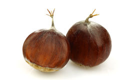 Two fresh chestnuts Royalty Free Stock Image