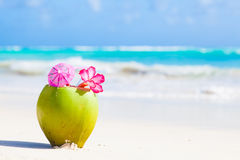 Two fresh coconut cocktail on tropical beach with Royalty Free Stock Photo