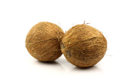 Two fresh coconuts. On a white background Royalty Free Stock Photo