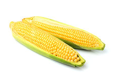 Two fresh corn cobs isolated. Two fresh corn cobs isolated on a white background Royalty Free Stock Photo