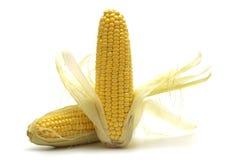 Two Fresh Corns Stock Photo