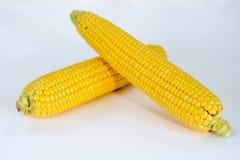 Two Fresh Corns Stock Photography
