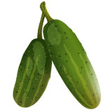 Two fresh cucumbers Stock Images
