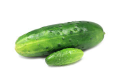 Two fresh cucumbers Royalty Free Stock Photos