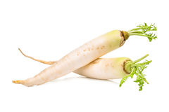 Two fresh daikon radish isolated on the white Royalty Free Stock Photos
