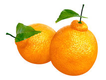 Two Fresh Dekopon orange. Foods and Dishes Series. Royalty Free Stock Image