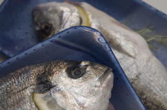 Two fresh dorado fish packaged Royalty Free Stock Images