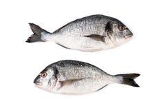 Two fresh Dorado fish on a white background. Isolated. Royalty Free Stock Photos
