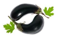 Two fresh eggplant Royalty Free Stock Photos