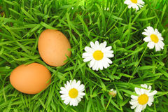 Two fresh eggs on green grass Royalty Free Stock Image