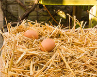 Two fresh eggs are in the sunlight in the strow Stock Photo