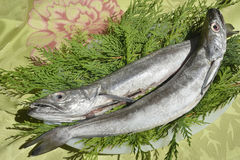 Two fresh European hake. Fishing hook, two whole and raw hake in tray Stock Image