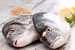 Two fresh fish. Stock Photos
