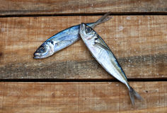 Two fresh fish Stock Image