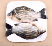 Two Fresh fish carp on white plate Stock Photos