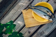 two fresh fish on a cutting Board, cooking mackerel,fish tails close up stock photos