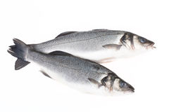 Two fresh fish on a light background Royalty Free Stock Images