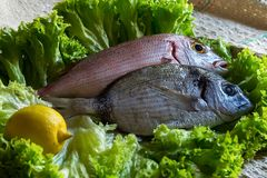 Two fresh fish with lemon royalty free stock photography