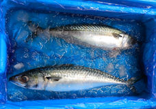 Two fresh fishes Stock Photos