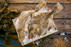 Two fresh flatfish on ice with kelp seaweed. Two fresh flatfish on ice in a wooden box to preserve their freshness with strands of kelp seaweed alongside on old Royalty Free Stock Images