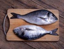 Two fresh gilt-head bream fish on cutting board. Two fresh gilt-head bream fish (dorada) on cutting board Stock Image