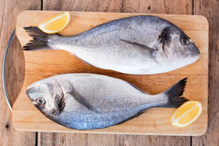 Two fresh gilt-head bream fish on cutting board. Two fresh gilt-head bream fish with slices of lemon on cutting board on wooden background Royalty Free Stock Image