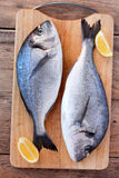 Two fresh gilt-head bream fish on cutting board. Two fresh gilt-head bream fish with slices of lemon on cutting board on wooden background Stock Photos