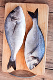 Two fresh gilt-head bream fish on cutting board. On wooden background Royalty Free Stock Images