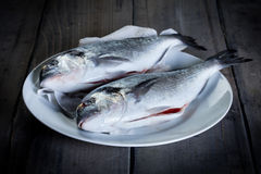 Two fresh gilthead Stock Photo