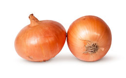Two Fresh Golden Onions Stock Image