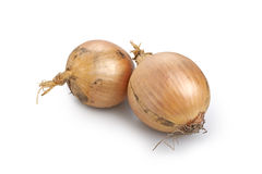 Two fresh golden onions Royalty Free Stock Photo