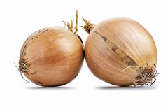 Two fresh golden onions Royalty Free Stock Images