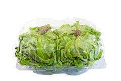 Two fresh green boston lettuce Stock Photography
