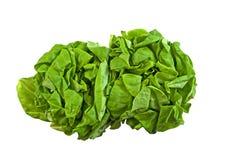 Two fresh green boston lettuce Stock Images