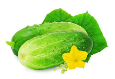 Two fresh green ripe cucumber. Two fresh green ripe cucumber with leaves and flower isolated on white background. Design element for product label, catalog Stock Photography