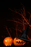 Two fresh halloween pumpkin on black Royalty Free Stock Images