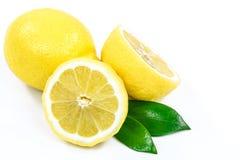 Two Fresh Lemons Stock Photos