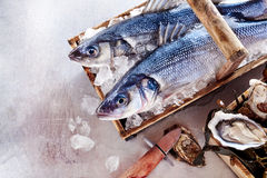 Two fresh Mediterranean sea bass or Loup de Mer Stock Image