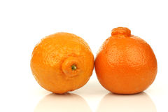 Two fresh minneola's Stock Photos