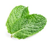 Two fresh mint leaves isolated on white background. Stock Photography