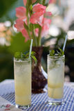Two fresh mojitos with mint and a flower. Composition of two glasses of mojito cocktail and pink flowers on colored background royalty free stock photography