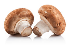 Two fresh mushroom champignon Stock Images