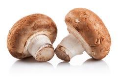 Two fresh mushroom champignon Stock Images
