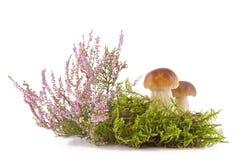 Two fresh mushrooms Stock Photos