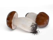 Two Fresh Mushrooms Isolated on White Background Stock Photo